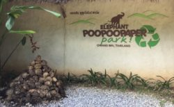 象のうんこパークで紙すき体験!チェンマイのプープーペーパーパーク