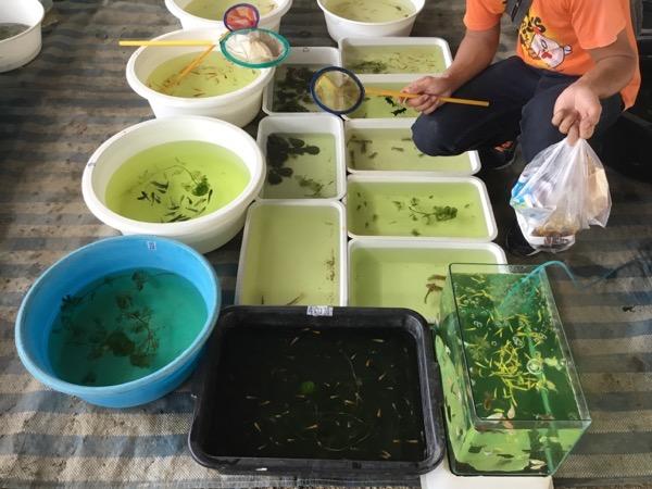 サパトーン市場の熱帯魚売り場