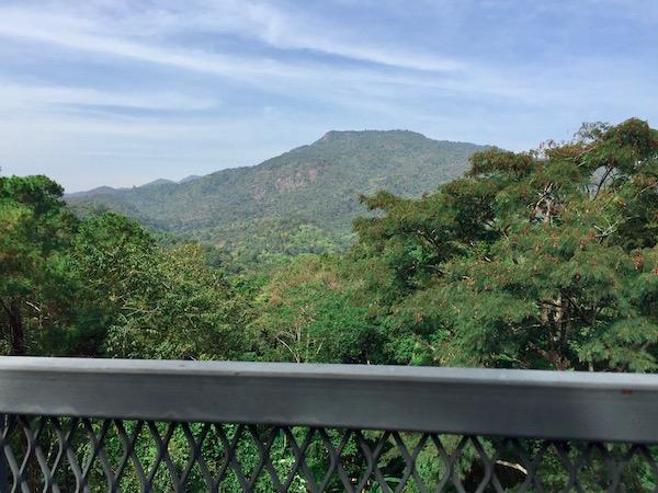 キャノピーウォークウェイからの山の景色