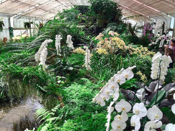 シリキット王妃植物園(蘭の観覧温室)