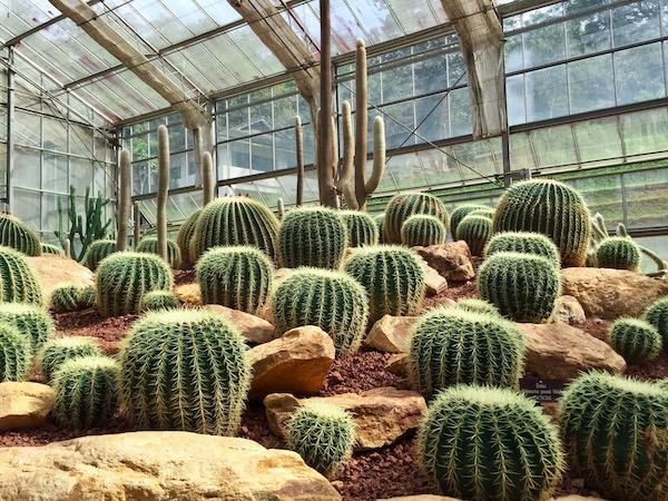 シリキット王妃植物園(サボテン&多肉植物の観覧温室)