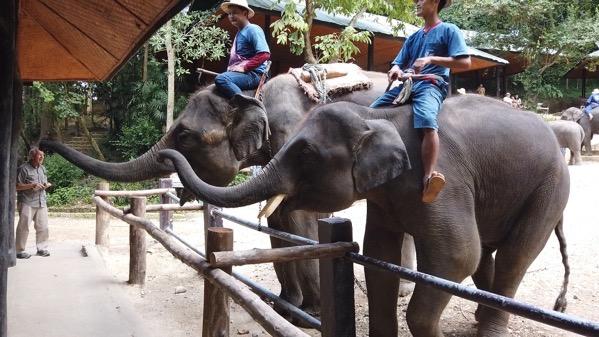 象の餌やり−1