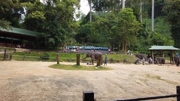象のマッサージ