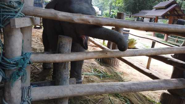 メーサーエレファントキャンプの象の赤ちゃん
