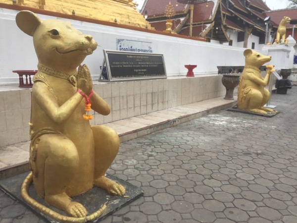 チョムトーン寺院の仏塔前のねずみ