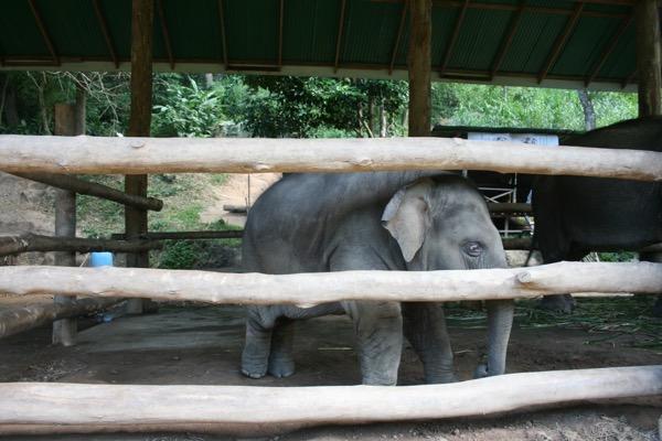 メーサーエレファントキャンプの赤ちゃん象の飼育エリア