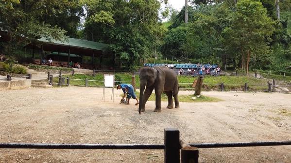 メーサー・エレファント・キャンプの象のお絵かき