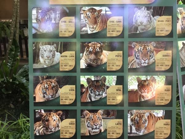 タイガーキングダムの在籍虎のパネル