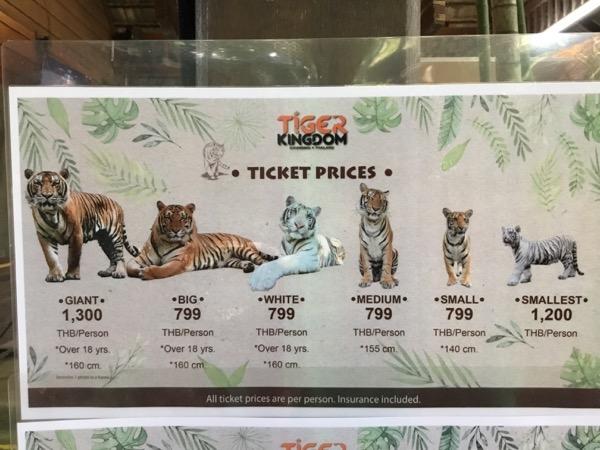 タイガーキングダム:虎単体の料金表