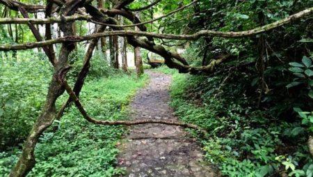 チェンマイの自然を満喫できるハイキングコース11選