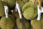 タイ産ドリアンチャニー種