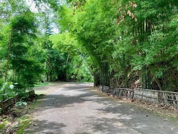 両脇が美しい竹で囲まれているワット パーラートの参道