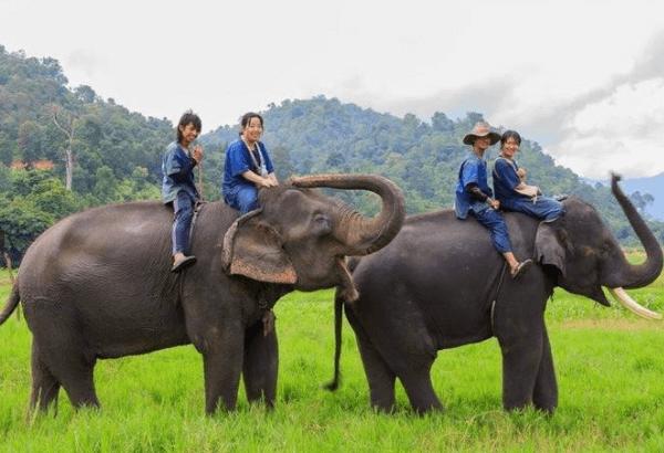 タイエレファントホームの象使い体験ツアーで裸象に乗る