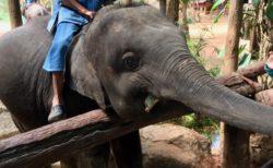 ランパーン象保護センター