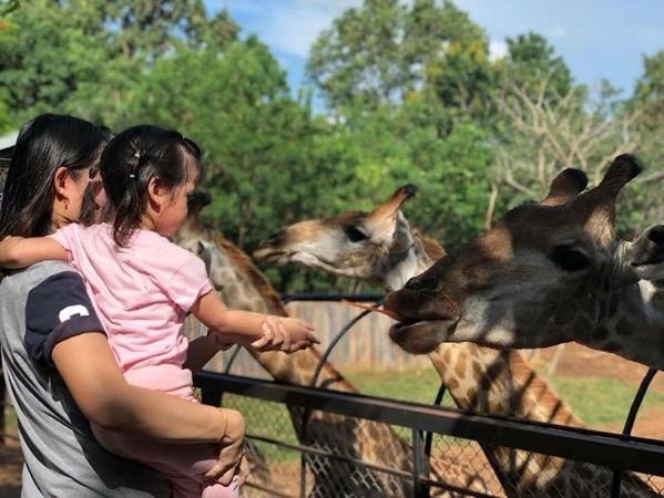 チェンマイ動物園キリンへの餌やり
