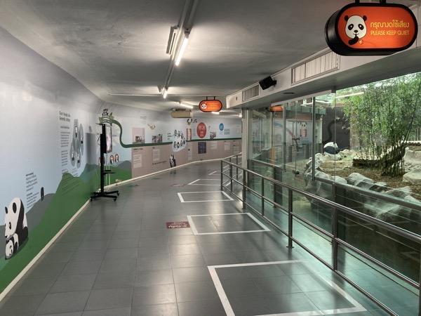 チェンマイ動物園のパンダ館内部