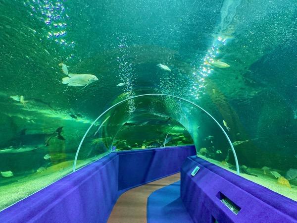 チェンマイ水族館の世界最長のアクアリウムトンネル(全長133m)